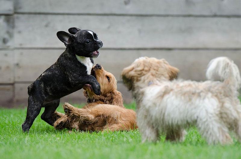 Ateliers pour chiots et jeunes chiens à Lyon
