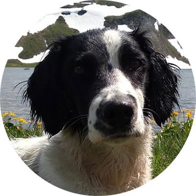 Irka, assistante comportementaliste canin lyon