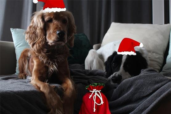 Faut-il acheter un cadeau pour noël à son chien ?
