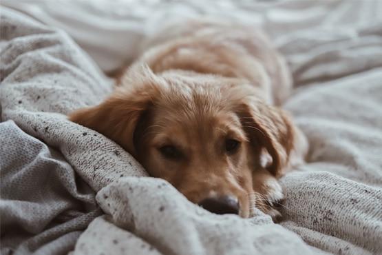 Comment occuper mon chien par mauvais temps ?