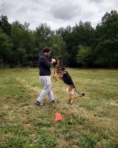 Apprentissage collectif pour chien Lyon périphérie