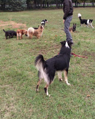 Cours collectifs chiens à Lyon